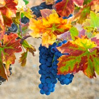 DCV Neighborhoods: Zinfandel Sources
