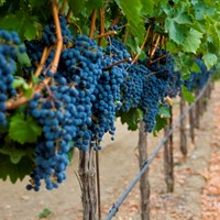 Varietal of the Year: Cabernet Sauvignon